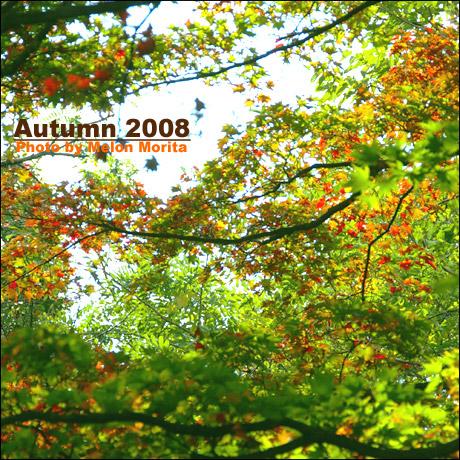 web460IMGP7162.jpg